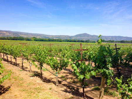 vinery: A view of a vineyard in Sonoma. Stock Photo