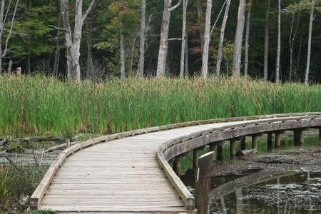 boardwalk trail: Wooden boardwalk trail over pond with cattails