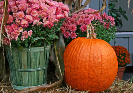 Pink chrysanthemums in a basket and a pumpkin on a hay bale on a porch Reklamní fotografie