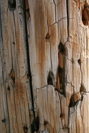utility pole: Close-up of damaged utility pole