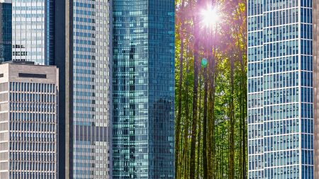 Trees in the Middle of a City between Skyscrapers