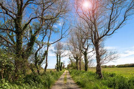 Tree Lined Gravel Road under Blue Sky 写真素材