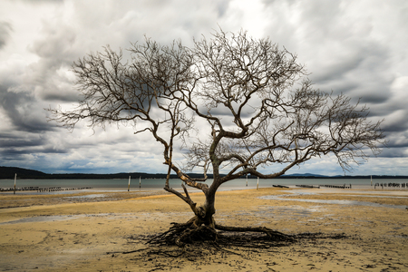 Tree with no leaves on beach at low tide