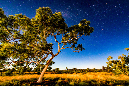 Starry night sky over outback landscape