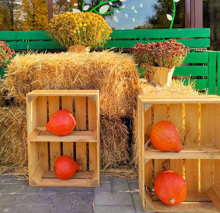 Orange pumpkins in wooden crates on hay background with autumn flowers.