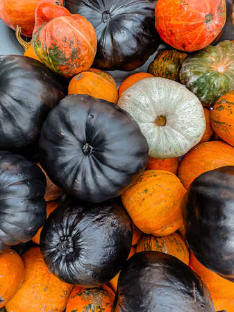 Heap of colorful pumpkins in black, orange and green colors.