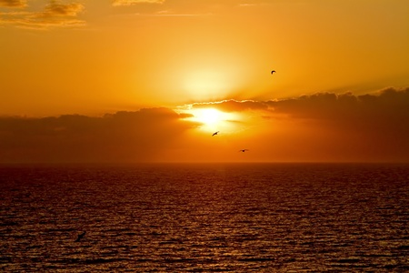 sunrise at the beach with birds flying