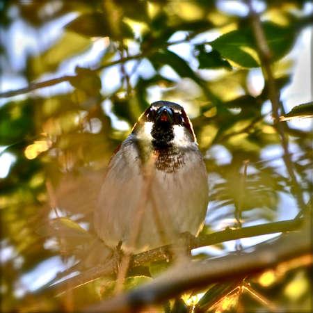 Sparrow on a Limb