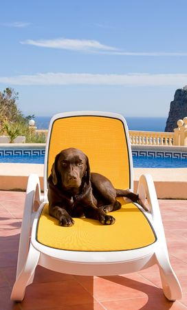 Sunbathing Labrador Puppy