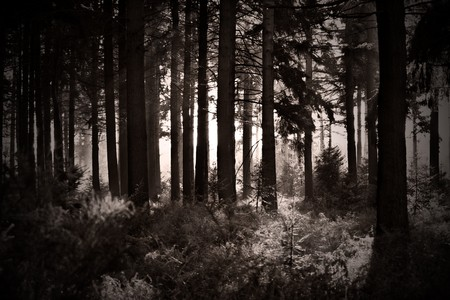 Black and White Shot of Light through Forest