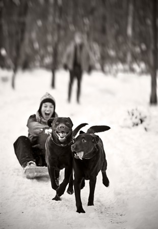 Two Labradors Pulling a Girl on Sledge Stock Photo