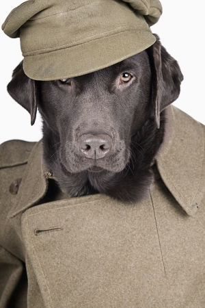Sgt Labrador in Army Uniform photo