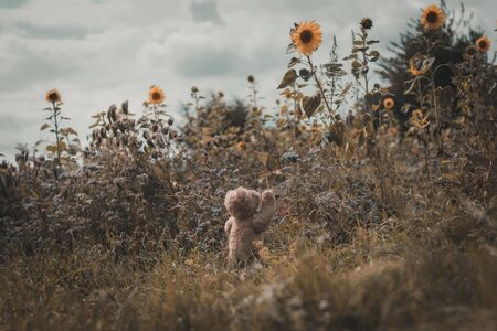 teddy bear is exploring, hiking and travel the world