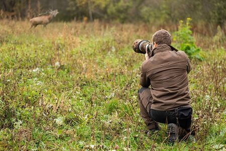 Wildlife photographer in brown cloths taking pictures of red deer, cervus elaphus, stag roaring on a meadow. Man with brown hair holding camera with telephoto lens in nature. Stock Photo