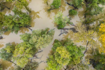 Flood in forest with green and yellow treetops from drone. Summer nature scenery from above with water level rising near river and floating branches and trunks.
