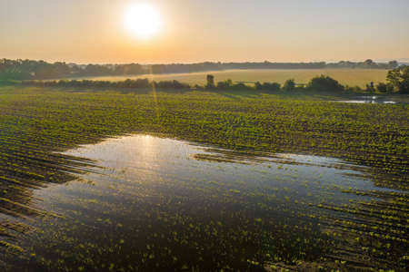 Sun rising over a green agricultural field with a splash filled with water Reklamní fotografie