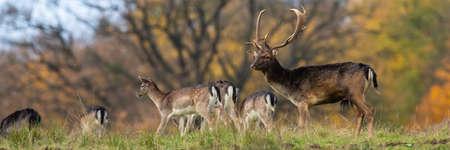 Group of fallow deer standing on field in horizontal shot.