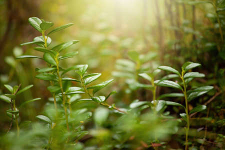 Green plant growing in forest in sunlight in background