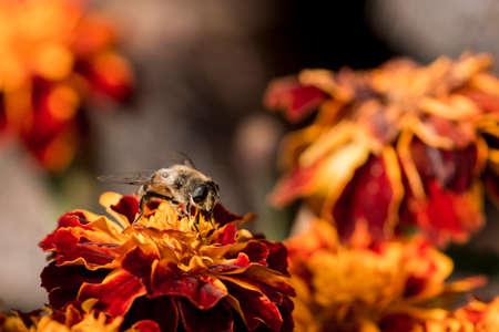 Bee in closeup shot