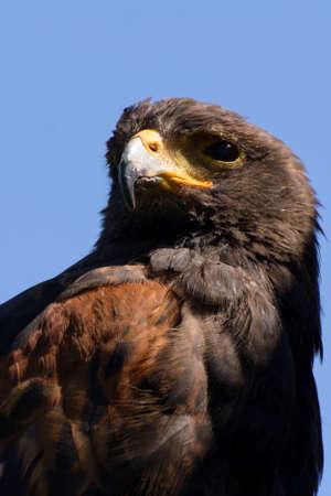 Eagle in closeup shot