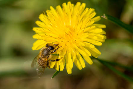 Bee on flower in closeup shot