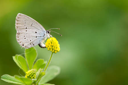 Butterfly collects nectar in the yellow flower in the park during summer day