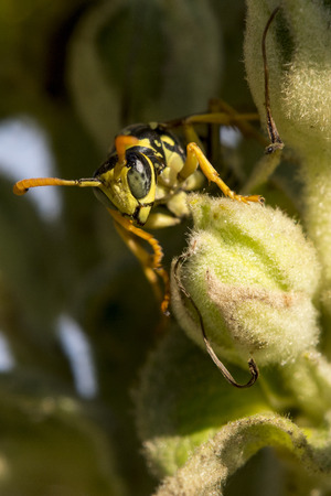 Detail of wasp