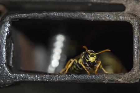 Macro detail of wasp in iron pipeline Stok Fotoğraf