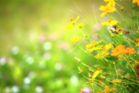 yellow flowers. Stock Photo - 8688980