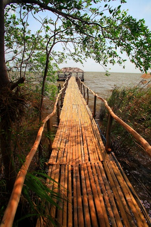Bridge in Mangrove forest of east Thailand photo
