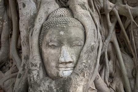 angkor wat: Tree of buddha and buddha head