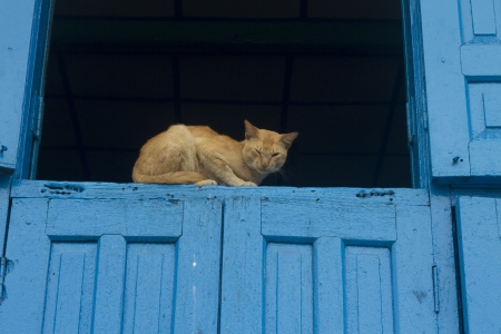 cat on the window photo