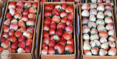 srawberries: Fresh strawberries in basket Stock Photo