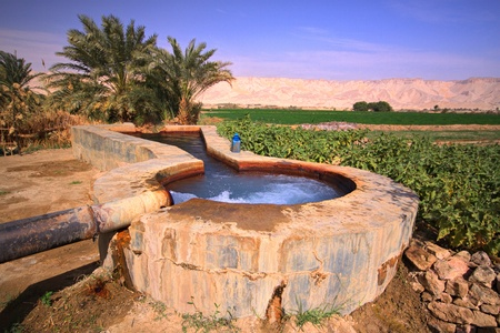 Spring and field in oasis,Egypt Stock Photo