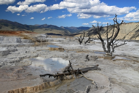 Dead trees at Upper Terrace thermal features at Mammoth Hot Springs