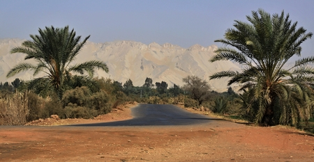 Kharga oasis ,the road with date trees and mountains