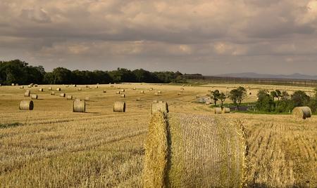 Many bales on grain field  photo