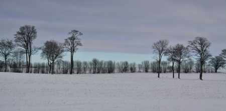 winter landscape with tries and gloomy sky