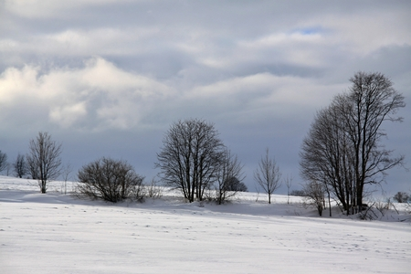 tries: winter landscape and blue sky and some tries Stock Photo