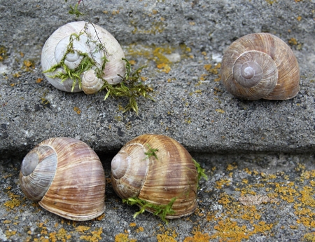 snails and shells on the very old stairs with different types of moss