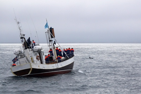 The ship with tourists and orca on the ocean Stock Photo