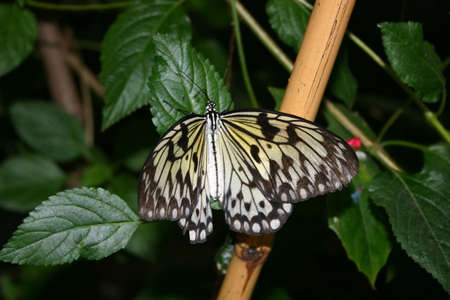 A butterfly spreading its wings photo