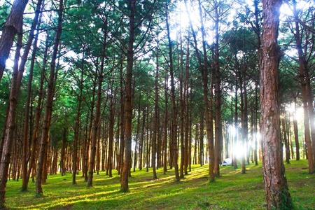 Phu Hin Rong Kla National Park, North of Thailand Stock Photo