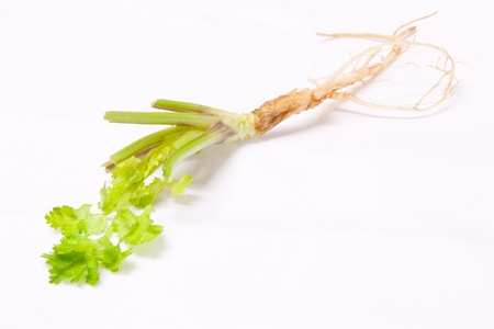 Green coriander root put on a white background