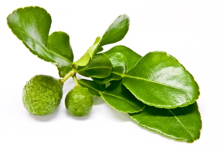 Kaffir lime and a twig of leaves on white background Stock Photo