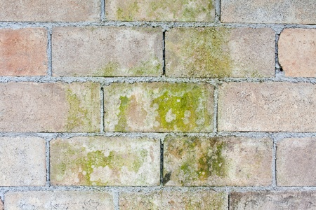 The cement wall on the dirt and moss