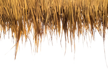 thatched roof: Dry yellow grass on white background