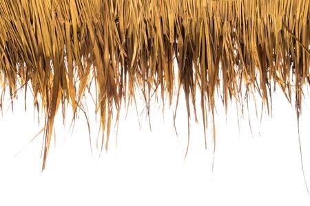 hojas secas: Hierba seca de color amarillo sobre fondo blanco