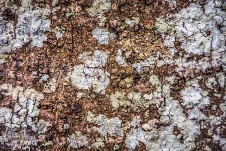 The bark of the tree photo