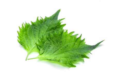 Shiso leaf on white background